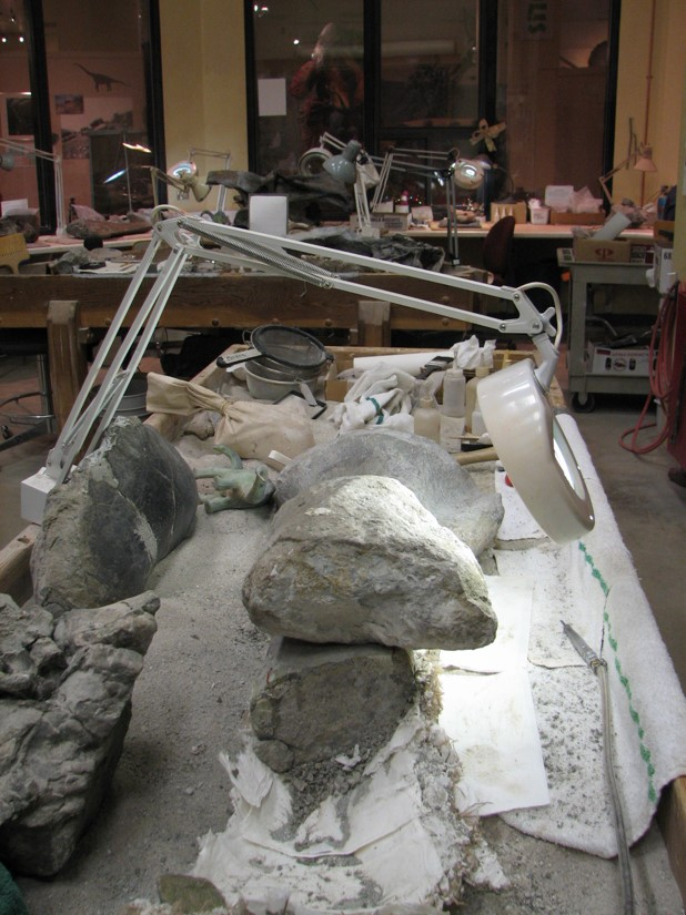 Concretion in the Lab at Dinosaur Journey