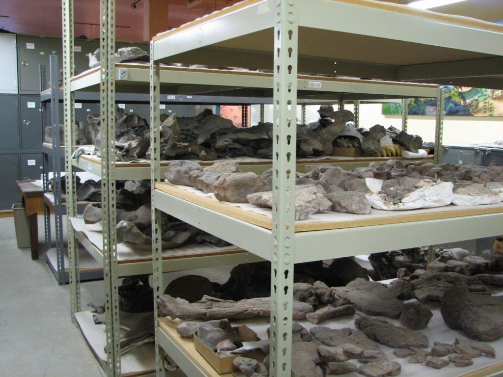 Dinosaur Bones from Dinosaur Journey