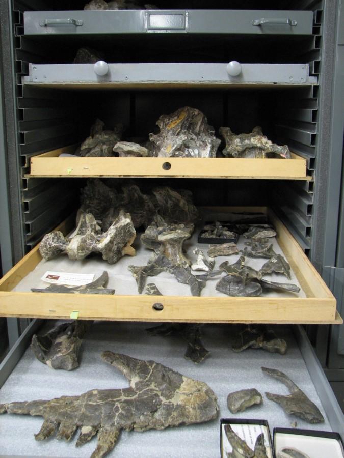 Dinosaur Specimens from Public Lands at Dinosaur Journey