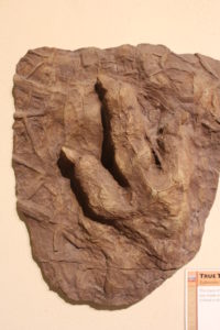 Dinosaur footprint! 195 million years old.