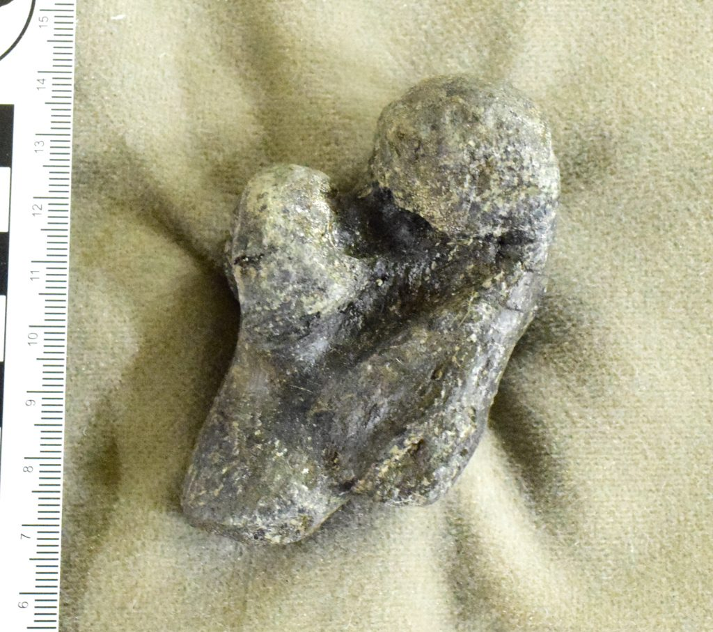 Allosaurus Thumb Phalanx