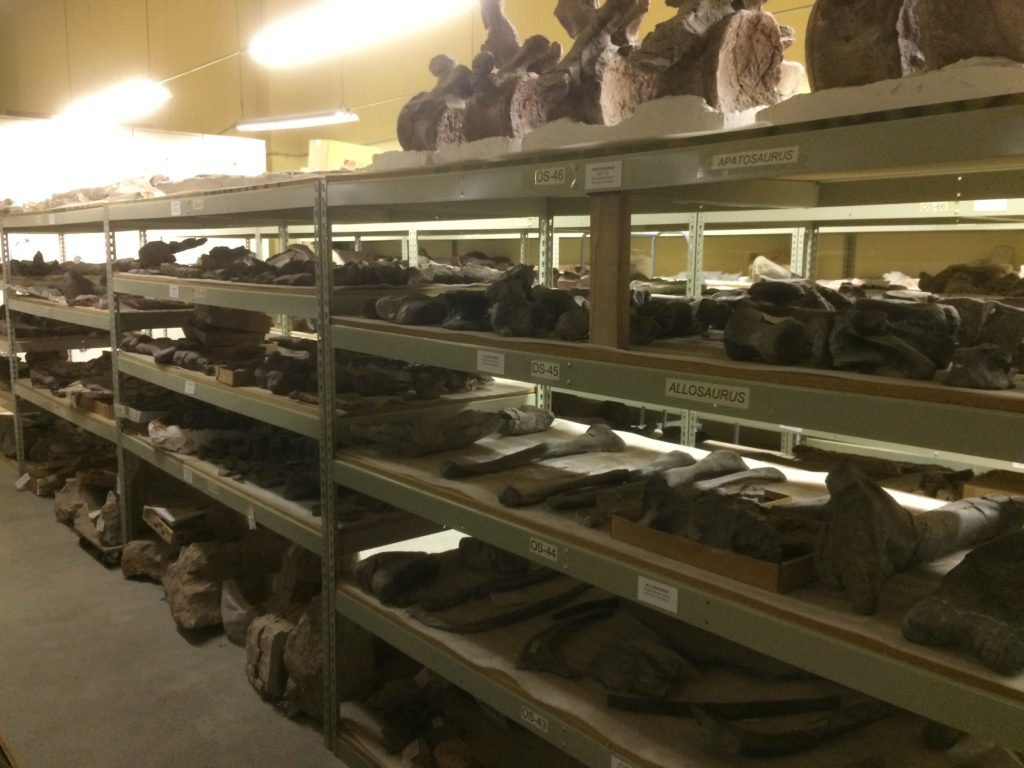 Public Lands collection housed at Dinosaur Journey.