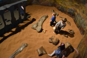 Test your skills at the Dinosaur Journey Dig Pit.