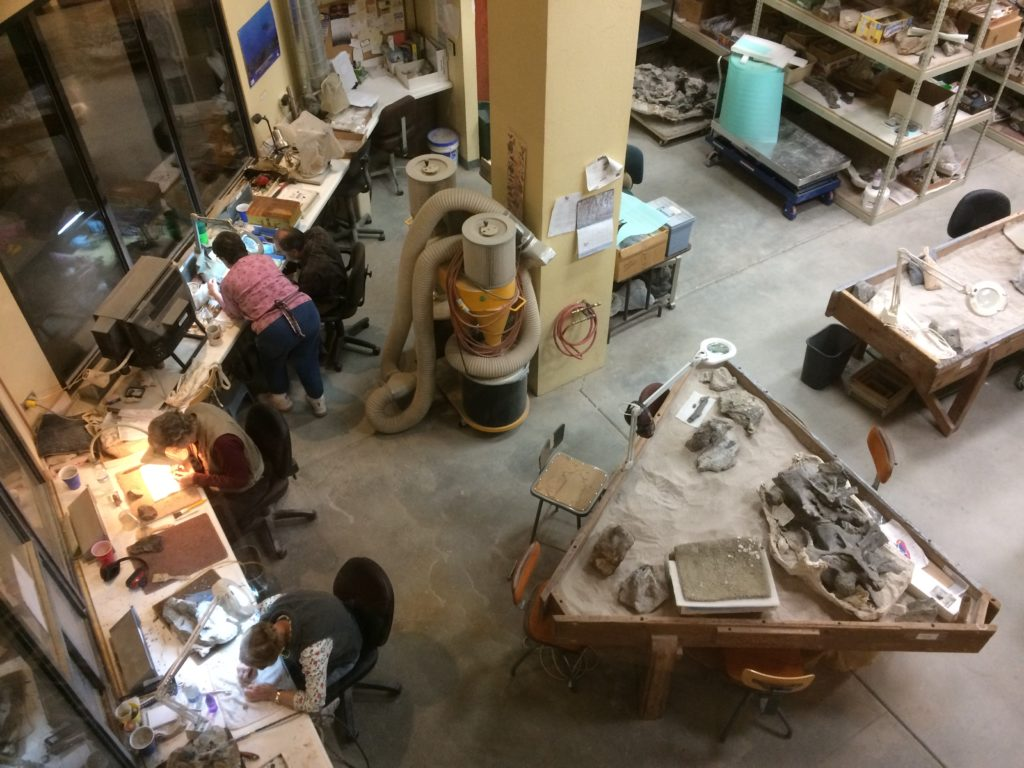 The lab at Dinosaur Journey Museum with volunteers hard at work cleaning fossils.