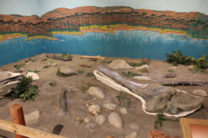 What does a 152 million year old dinosaur grave site look like?