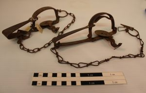 Trappers used all kinds of traps and snares depending on the animal they were hunting. These are long-spring traps and they were used for small animals like muskrat and mink. MWC Collection